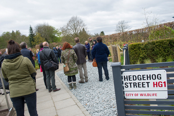 HedgehogStreetlaunch004